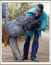 Wendi the elephant